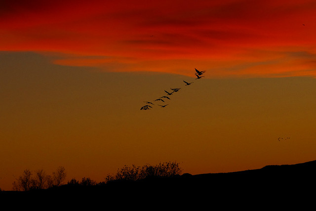 Sunset at Bosque del Apache national Wildlife Refuge.  New Mexico, USA.
