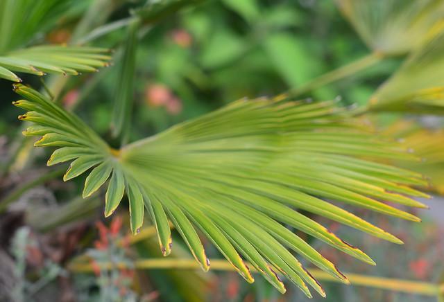Exotic Garden leaf