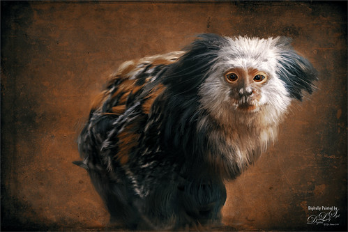 Painted image of a Tamarin Monkey at the Smithsonian National Zoo
