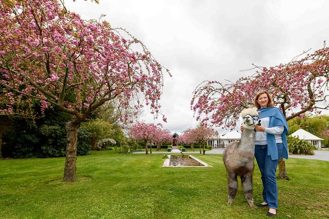 Silverstream Alpaca Farmstay --- New Zealand --- 05/10/2018