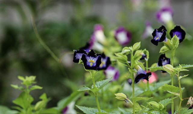 In my small garden