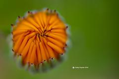 Flower 0115