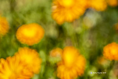 Flower 0121