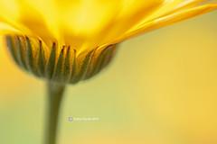 Flower 0120