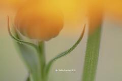 Flower 0119
