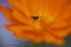 Flower 0103