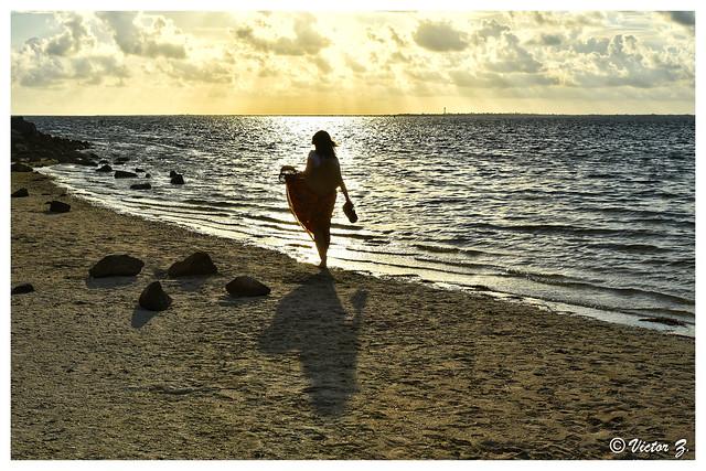 Fred Howard Park Beach Tarpon Springs Florida -26