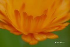 Flower 0098
