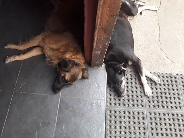 San Perro, Guatemala. . . . . . #travel #housesitting #locationindependent #amwriting #housesitter #digitalnomad #dogstagram #dogs #lakeatitlan #lagoatitlan #sanpedrolalaguna #Guatemala