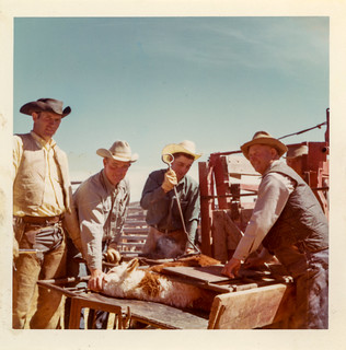 Branding day at the Adobe Ranch, ca. 1963