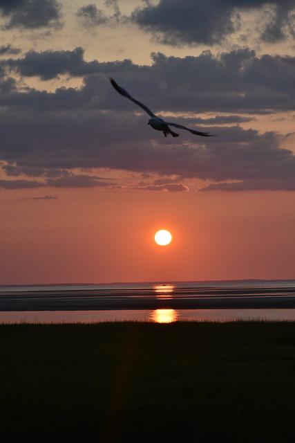 winged sunset