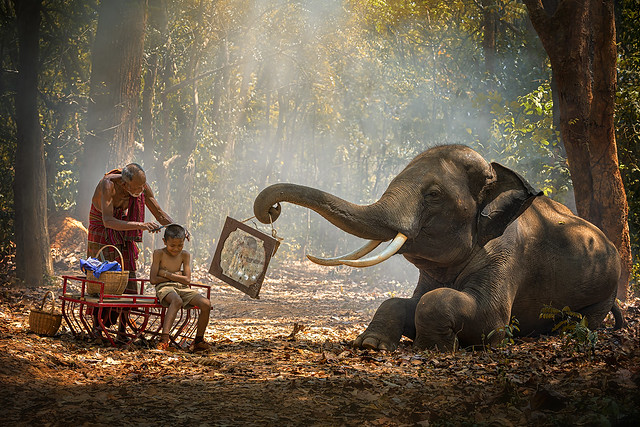 Elephant mahout portrait. Grandfather was cutting his nephew with an elephant holding a mirror. vintage style. The activities at Krapho, Tha Tum District, Surin, Thailand.