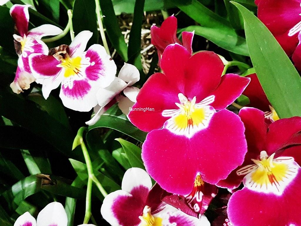 Flowers Bloom By Night