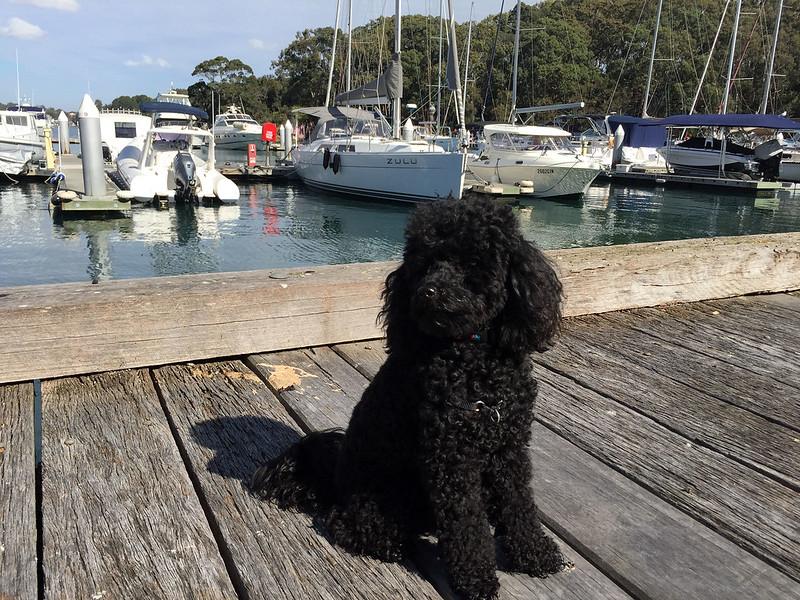 Scully at the marina