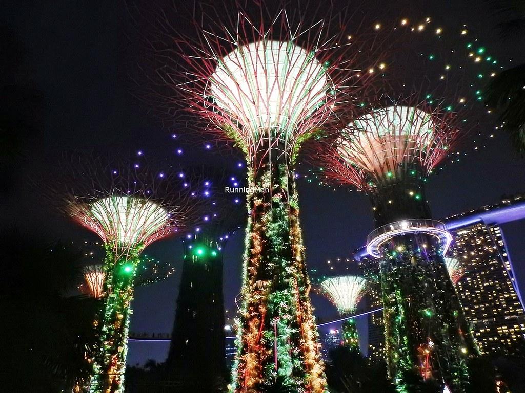 Supertree Grove Light Show