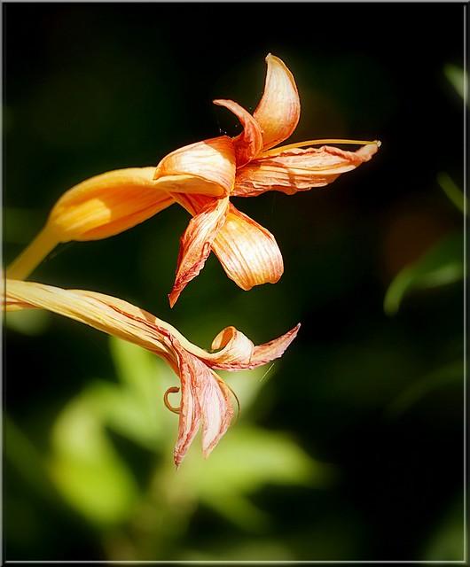 Au jardin des plantes. - Page 3 48565324002_18951e7261_z
