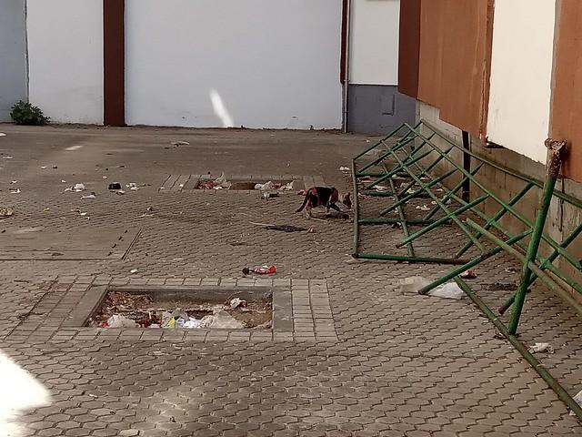 Plaga de ratas y gatos con pulgas en barriada La Oliva