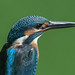 Kingfisher 190817601.jpg