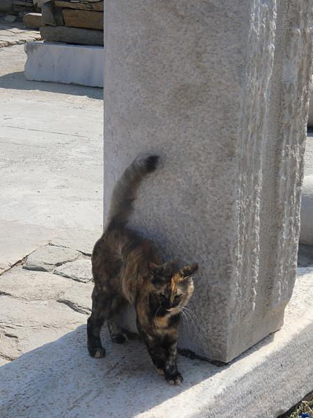 le chat du pilier