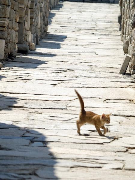 chat dans les ruines