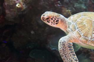 sea turtle Bonaire 2019 Underwater_08 05 19_0242