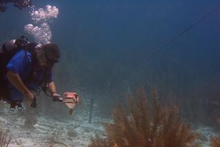 balloonfish and diver Bonaire 2019 Underwater_08 05 19_0268