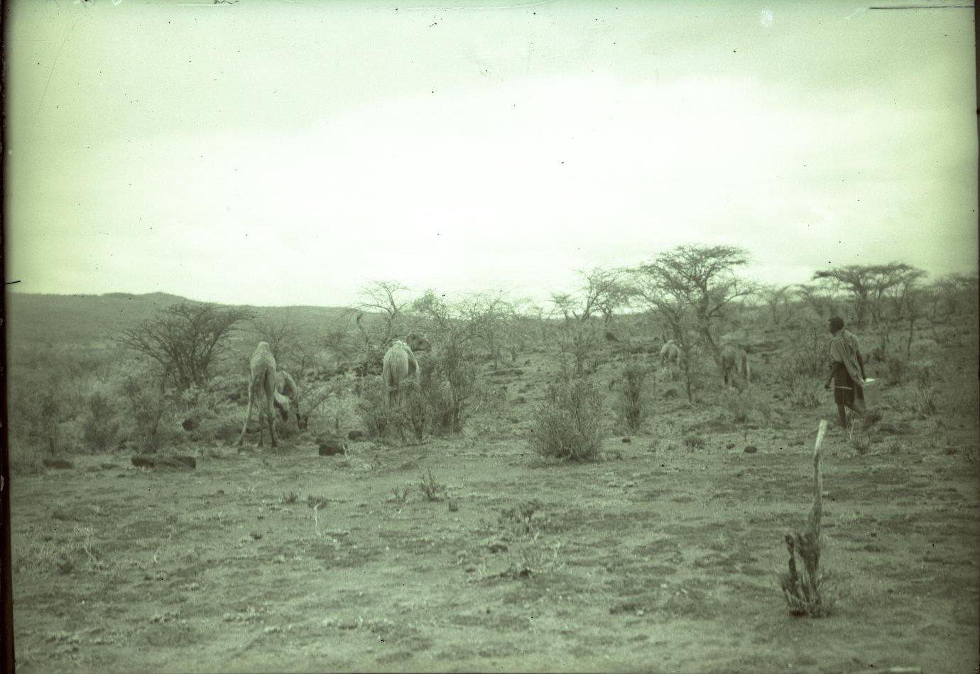 164. В сомалийской пустыне. Близ Армали