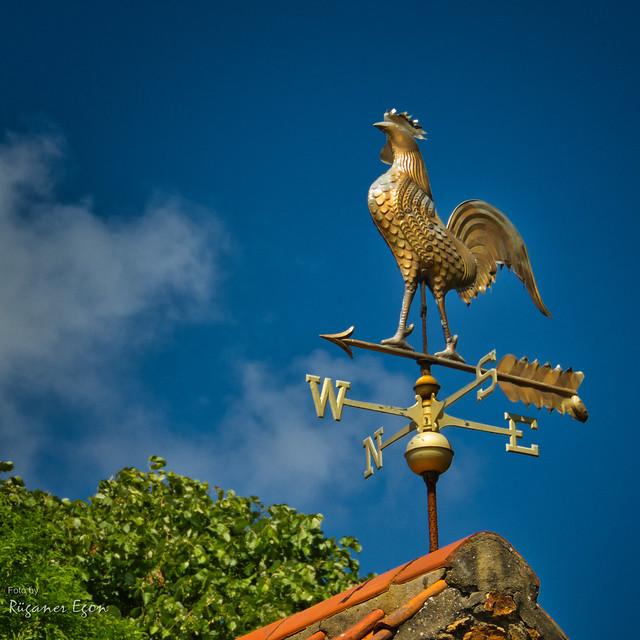 Guernsey - Wetterhahn