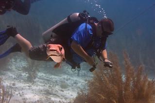 balloonfish and diver Bonaire 2019 Underwater_08 05 19_0270