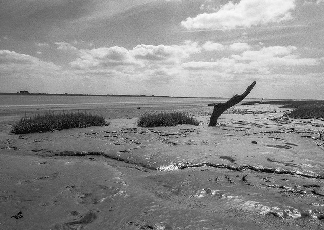 Low tide at Sunderland Point: Nessy in the mud