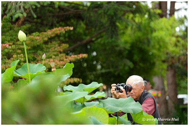 The Photographer And The Flower - Buddhist Temple XT8306e