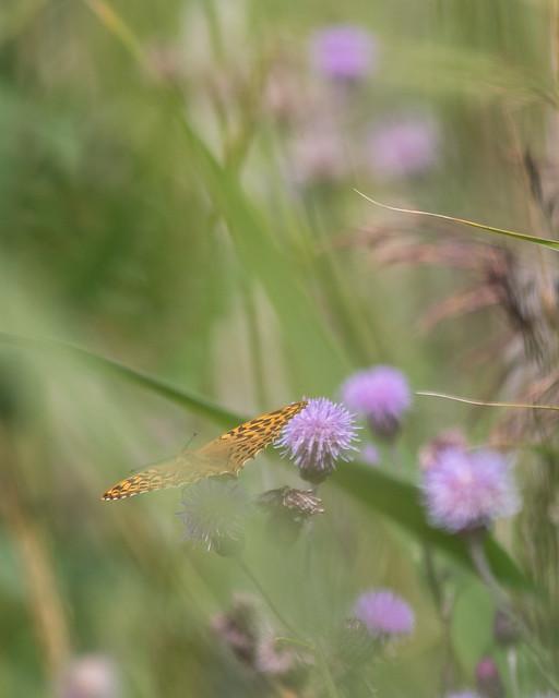 Fjäril flyr in i gräset.