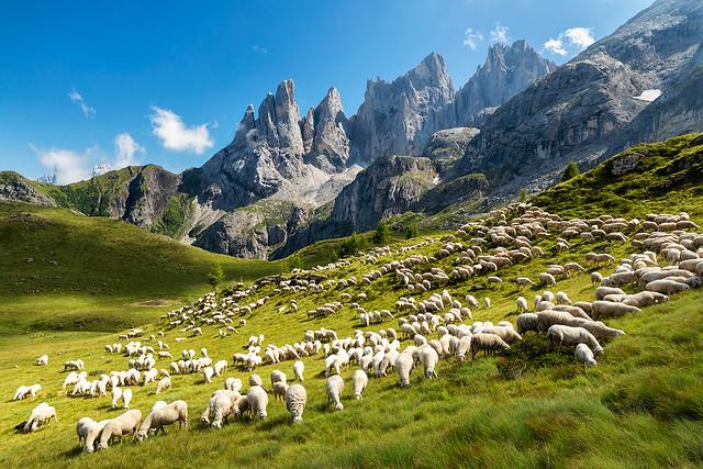 Gregge di pecore sotto il Focobon