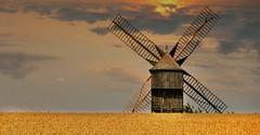 Doshes (Aube, Champagne, Grand-Est, Fr) – Le moulin à vent