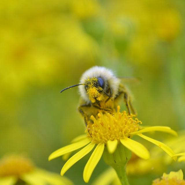Pollen McPollen face