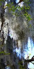 Savannah Nature