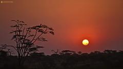 20190755 Tanzania-Serengueti (72) R01