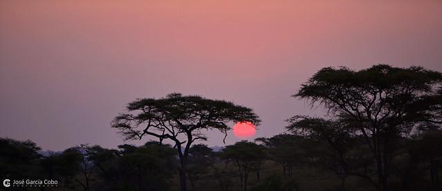 20190722 Tanzania-Serengueti (39) R01