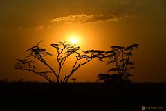 20190722 Tanzania-Serengueti (165) R01