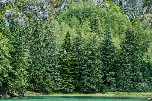 In the Alaska Rain Forest - Seldom Snows but LOTS of Rain