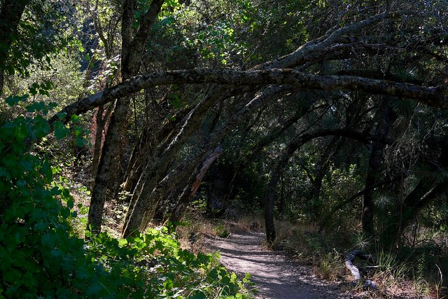 Hike #30 - Dave Moore Nature Area Trail