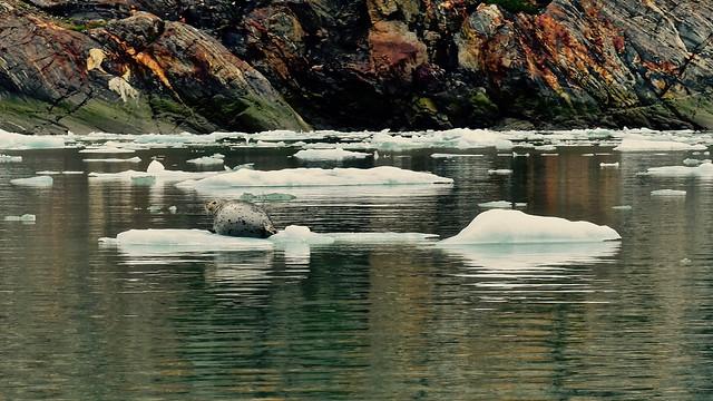 Atop an Iceberg