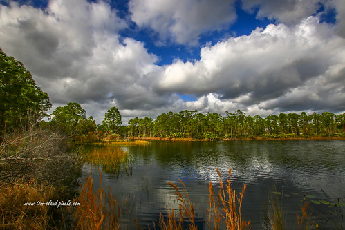 lake view lakeview water pond trees grass outdoors nature mothernature landscape clouds cloudy sky bluesky weather park halpatiokee halpatiokeeregionalpark stuart florida usa