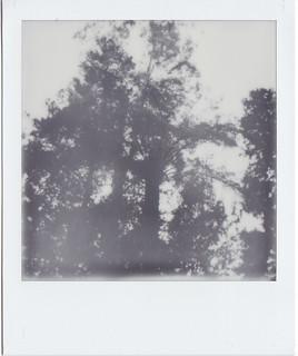 Tree fern and tree