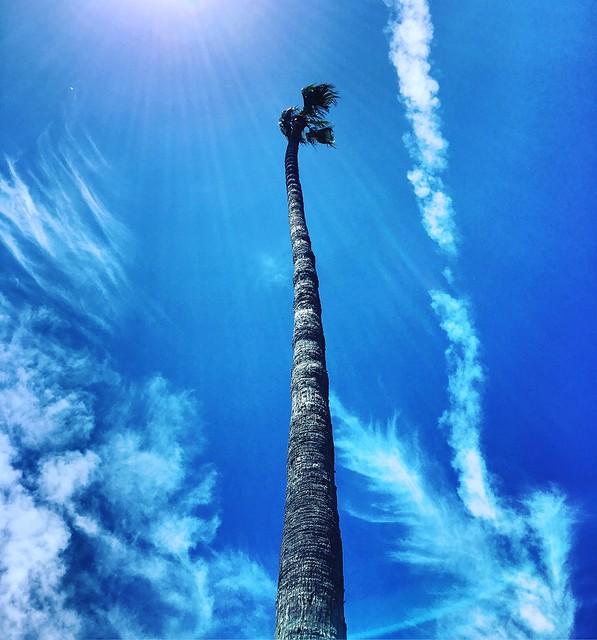 Palme tree, Mission San Juan Capistrano, Orange County, California
