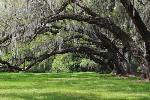 magnolia plantation gardens charleston south carolina sc landscape travel april 2019 trees spanish moss