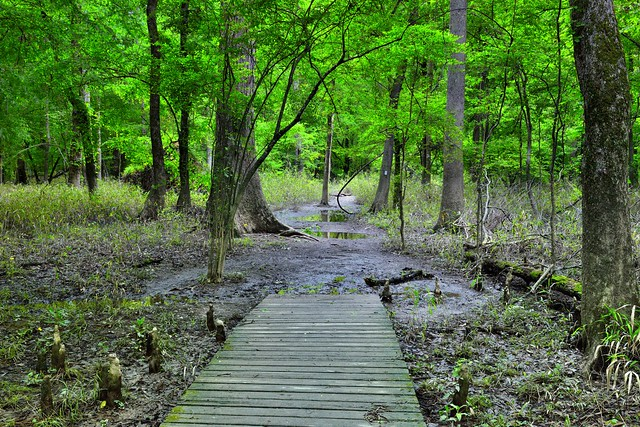 An Official Vacation Guide to Congaree National Park!