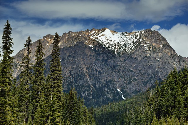Porcupine Peak Amongst the Trees of Okanogan-Wenatchee National Forest
