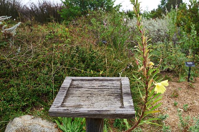 arboretum_L1040211