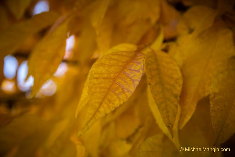 Fall in Colorado, Teller County
